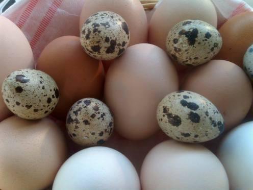 Chicken & Quail Eggs